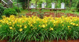 Tips Menghias Taman Depan Rumah supaya Terlihat Cantik